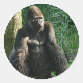 Adesivo Redondo Gorila