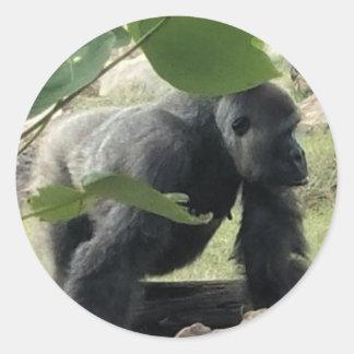 Adesivo Redondo Gorila do Silverback
