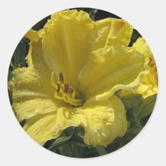 Adesivo Redondo Hemerocallis amarelos majestosos