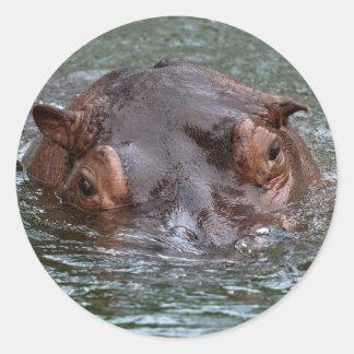 Adesivo Redondo Hipopótamo 8879