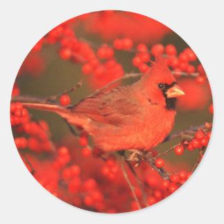 Adesivo Redondo Homem cardinal do norte vermelho, IL