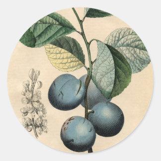 Adesivo Redondo iPhone botânico do impressão da ameixa do vintage