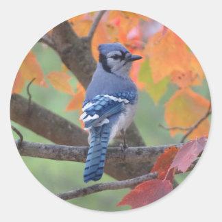 Adesivo Redondo Jay azul