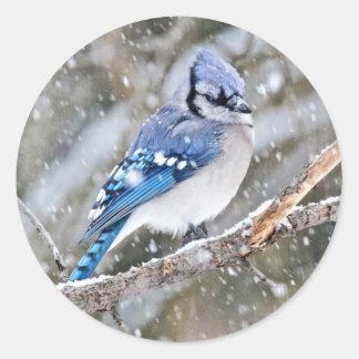 Adesivo Redondo Jay azul em uma tempestade de neve