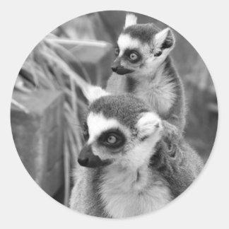Adesivo Redondo lemur Anel-atado com o bebê preto e branco