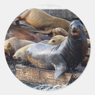 Adesivo Redondo Leões de mar na doca de flutuação em San Francisco