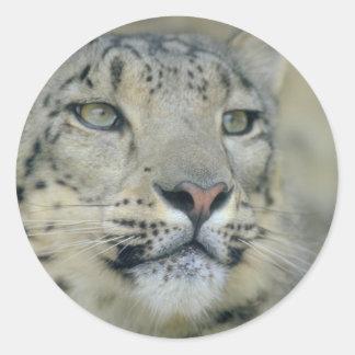 Adesivo Redondo leopardo de neve