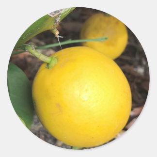 Adesivo Redondo Limões amarelos