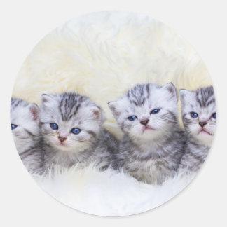 Adesivo Redondo Ninho com os quatro gatos de gato malhado novos em