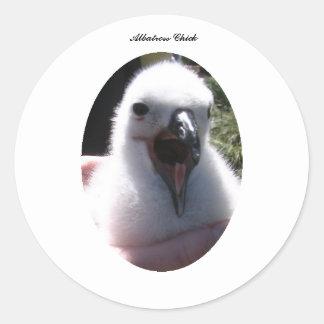 Adesivo Redondo Ninhos do pintinho do albatroz nas mãos humanas