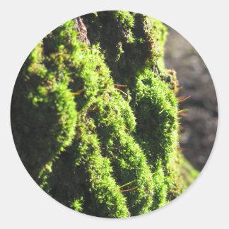 Adesivo Redondo O musgo verde no detalhe da natureza de musgo