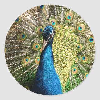 Adesivo Redondo O pavão bonito