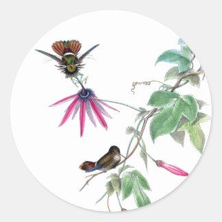 Adesivo Redondo Os animais selvagens dos pássaros do colibri