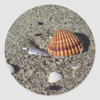 Adesivo Redondo Os Seashells no verão da areia encalham a opinião