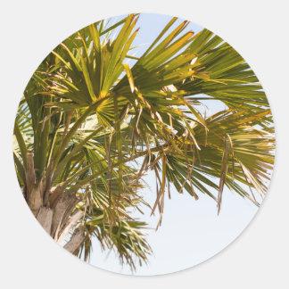 Adesivo Redondo Palmeira da costa leste Myrtle Beach famoso