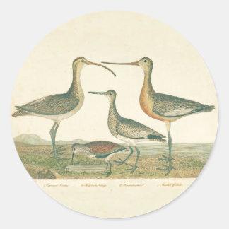 Adesivo Redondo Pântano antigo do impressão do pássaro litoral