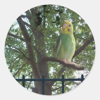 Adesivo Redondo Parakeet