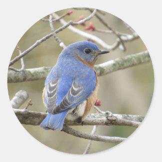 Adesivo Redondo Parte traseira do Bluebird