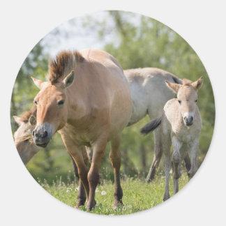 Adesivo Redondo Passeio do cavalo e do potro de Przewalski