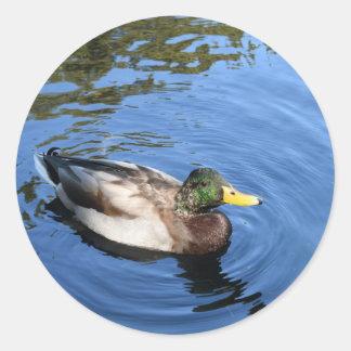 Adesivo Redondo Pato conservador do pato selvagem da água do