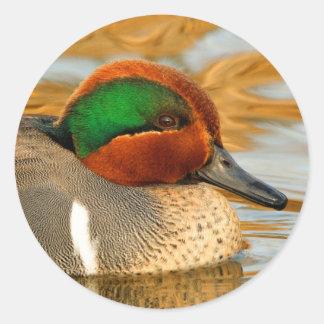 Adesivo Redondo Pato Verde-Voado considerável da cerceta na lagoa