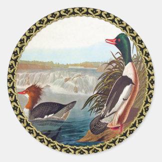 Adesivo Redondo Patos americanos do pato selvagem em uma natação