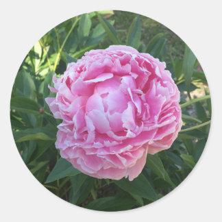 Adesivo Redondo Peônia cor-de-rosa