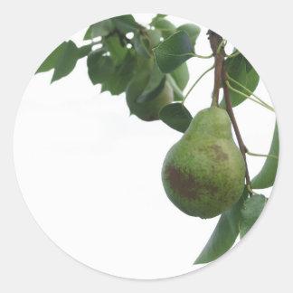 Adesivo Redondo Peras verdes que penduram em uma árvore de pera