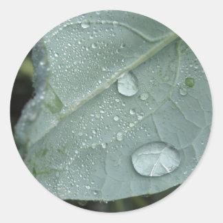 Adesivo Redondo Pingos de chuva nas folhas da couve-flor