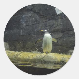 Adesivo Redondo Pinguim