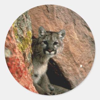 Adesivo Redondo Puma - foto do leão de montanha