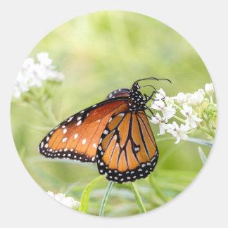 Adesivo Redondo Rainha que expor ao sol no milkweed