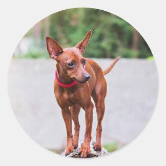 Adesivo Redondo Retrato do cão vermelho do pinscher diminuto