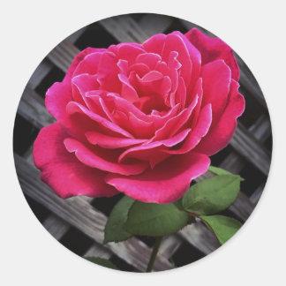 Adesivo Redondo Rosa do rosa