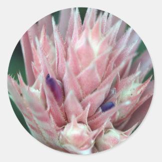 Adesivo Redondo Rosa Enchanted