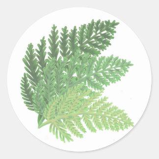 Adesivo Redondo Samambaias do verde de musgo