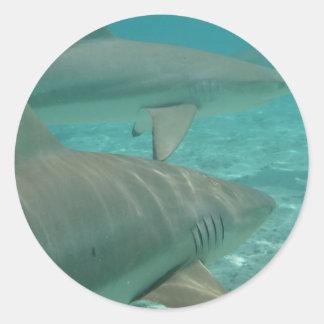 Adesivo Redondo shark