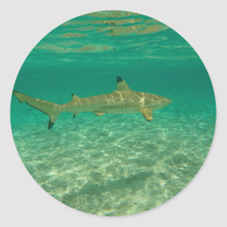 Adesivo Redondo Shark in bora bora