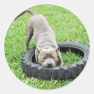 Adesivo Redondo Staffordshire bull terrier, um Chomp,