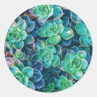 Adesivo Redondo Succulents, Succulent, cacto, cactos, verde,