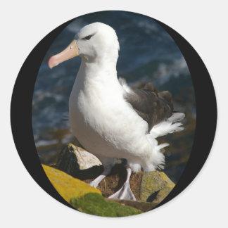 Adesivo Redondo Suporte do albatroz no auge do penhasco do mar