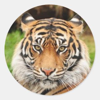 Adesivo Redondo Tigre de Bengal