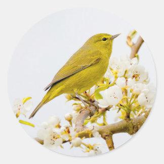 Adesivo Redondo Toutinegra Alaranjado-Coroada entre as flores de