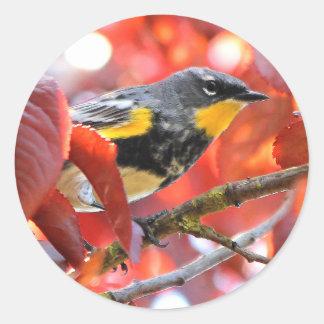 Adesivo Redondo Toutinegra Amarela-Rumped bonita na árvore