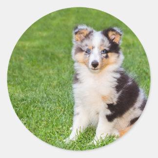 Adesivo Redondo Um cão novo do sheltie que senta-se na grama