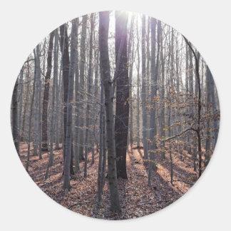 Adesivo Redondo Uma floresta da faia na queda
