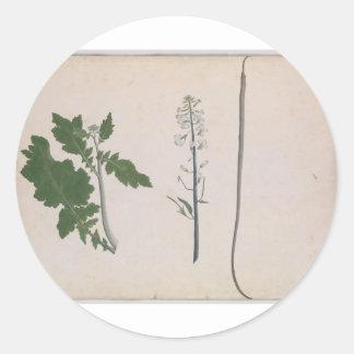 Adesivo Redondo Uma planta de rabanete, uma semente, e uma flor