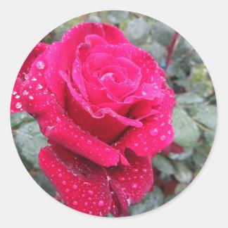 Adesivo Redondo Única flor da rosa vermelha com gotas de água
