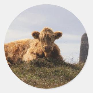 Adesivo Redondo Vaca de Luing na ilha de Islay, Scotland