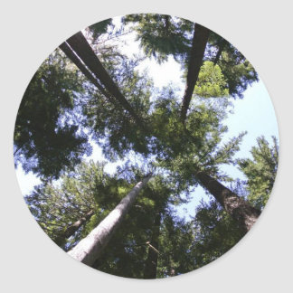Adesivo Redondo Vista acima na floresta